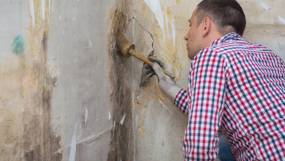 Consider These Factors Before Hiring a Mold Removal Service